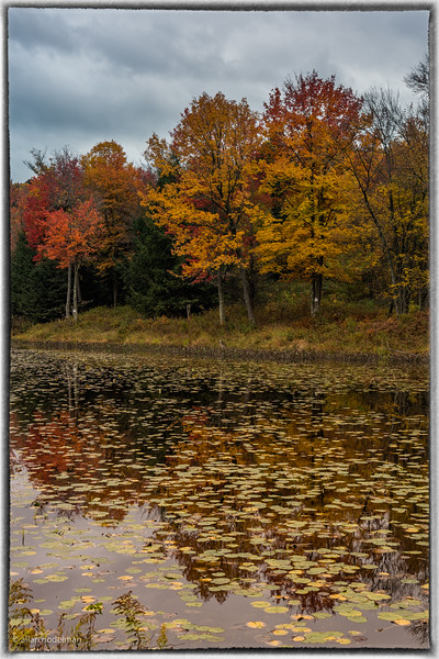 Fall Colours in New York State