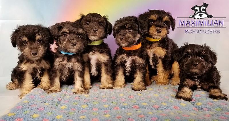 Yanabell Pups 010.jpg