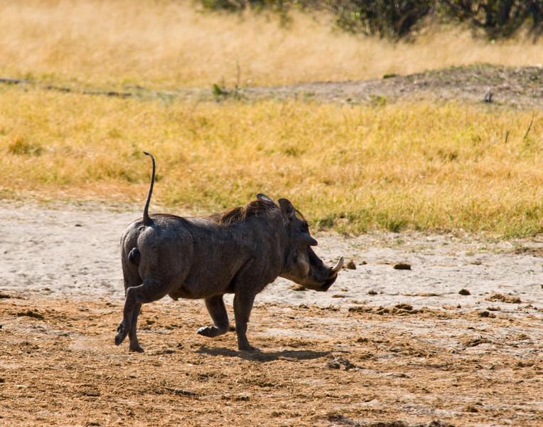 warthog (1).jpg