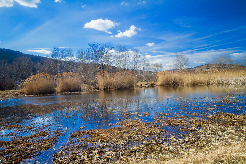 Early Spring on the Danube Island