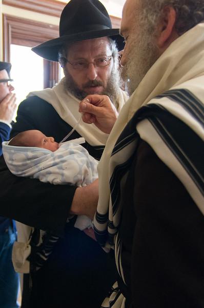 Menachem's Son
