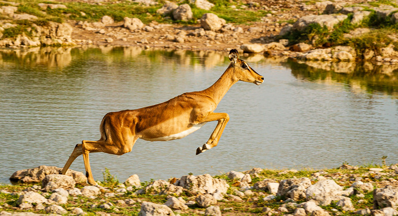 Long leap