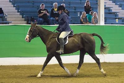 165 - KSHA Approved Adult/Walk Hunt/Saddle Seat Pleasure 19 & over