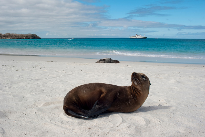 The Galapagos Islands with Lindblad and Jeopardy!