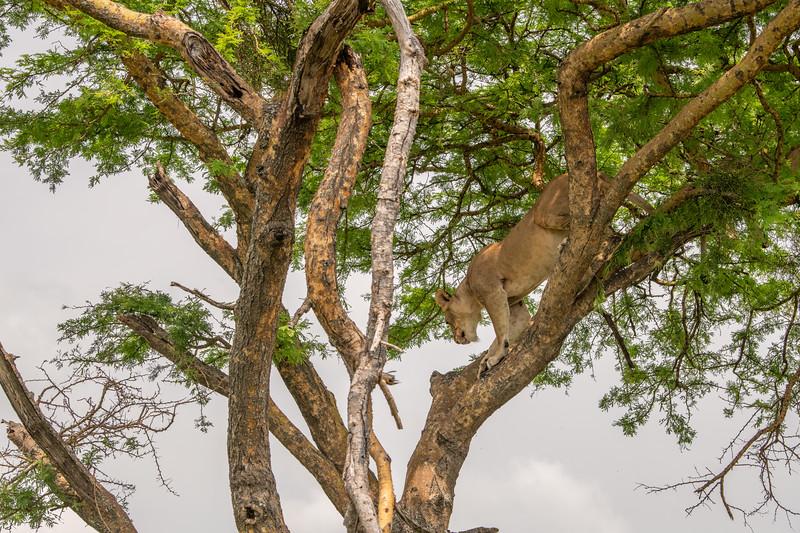 Uganda_T_QE-1510.jpg