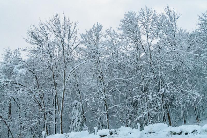 November 2018 Snowfall-_5009235.jpg