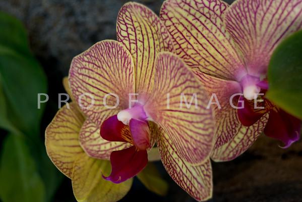 Denver Botanic Gardens - 2013