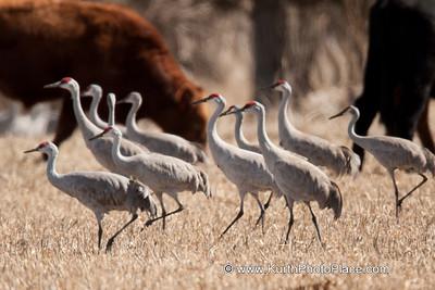2009 Cranes Part 1