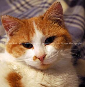 023-cat_tippy-warren_co-16feb 09-7541