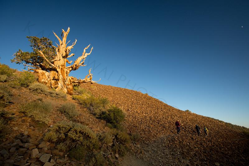Group_hike_bristlecone.jpg