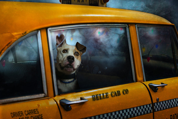 Classic Dogs with Classic Cars