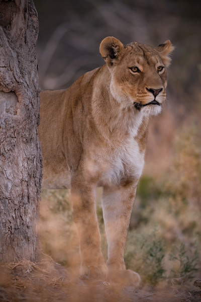 Botswana_June_2017 (5473 of 6179).jpg