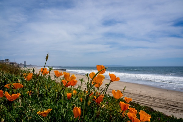 April 25 - Spring day at Will Rogers Beach in Los Angeles.jpg