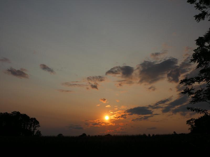 cornfield sunset 3.jpg