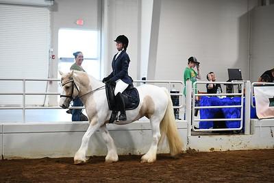 42 ld youth under saddle