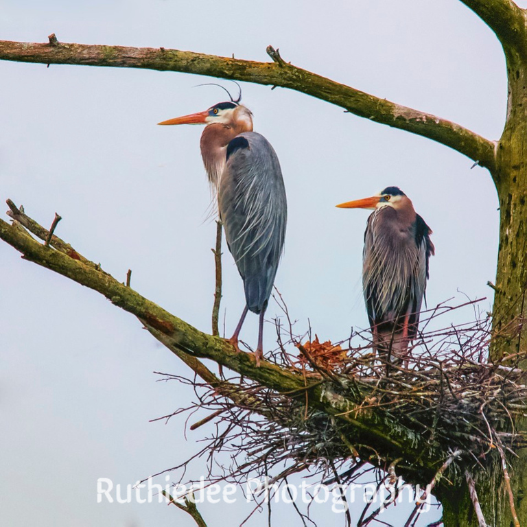Guardians of the nest...