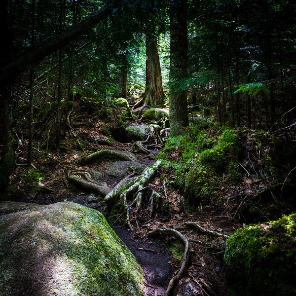 The Mossy Trail