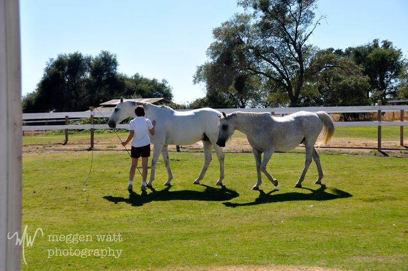 EB&Horses-146.jpg
