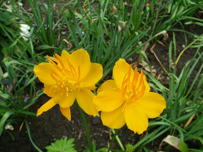 flowers 036.jpg