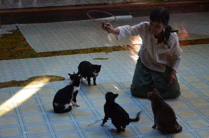 DSC_4446-cats-at-jumping-cat-monastery.JPG