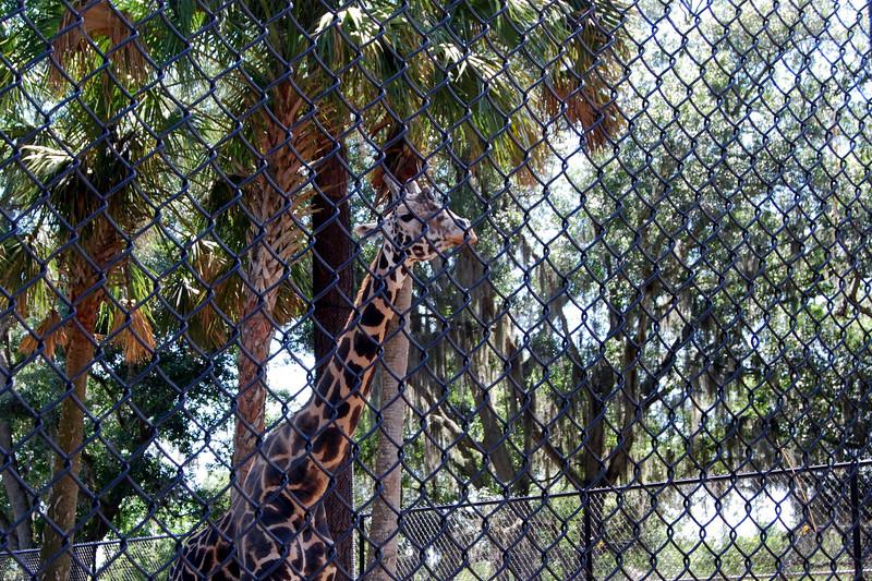 2014 Zoo in Sanford, Florida (17).JPG