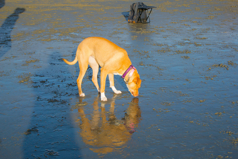 dogs_beach-35.jpg