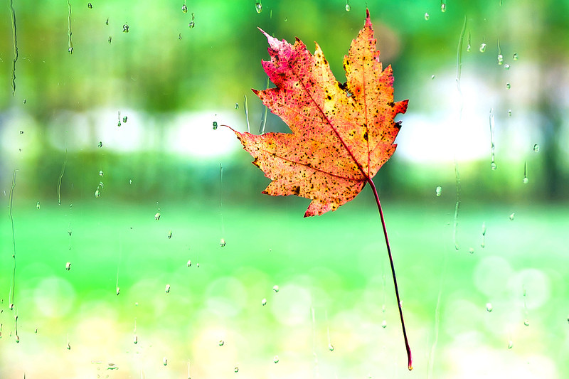 20131005 Leaves Window-5087-FINAL v3.jpg