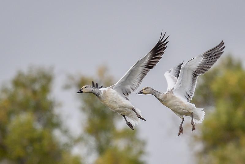 Merced National Wildlife Refuge, Merced CA USA