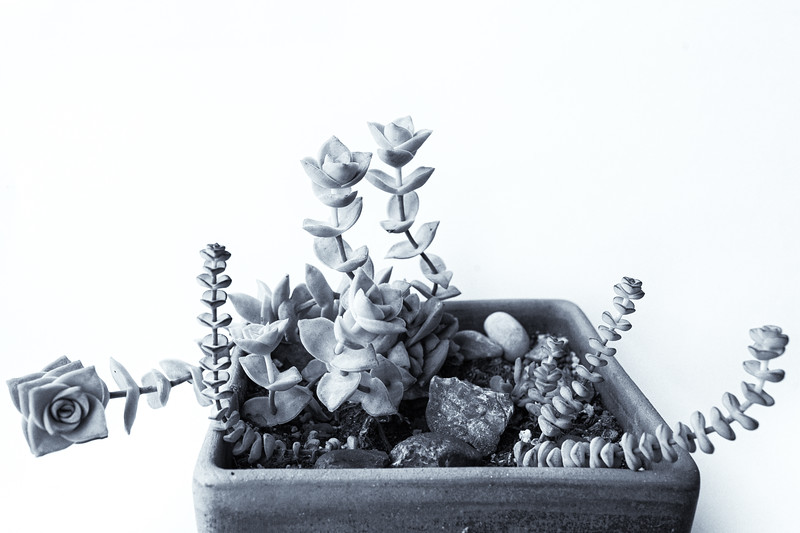 Succulents in a pot 061220-.jpg