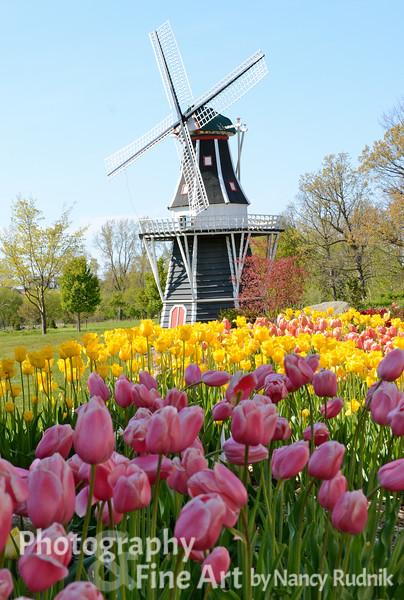 Holland, MI - Tulip Time 2012