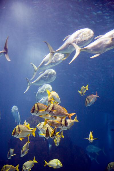 Shoals of different kinds of fish, Lisbon Oceanario