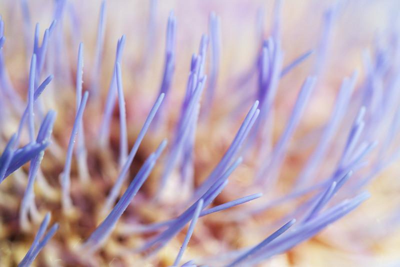 9064 Artichoke Blossom.jpg