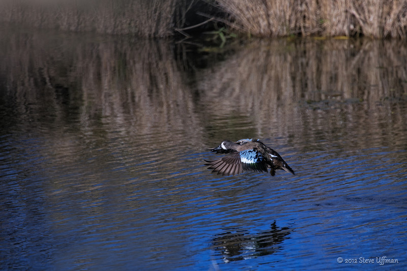 20121218-_G7Q7560Lacassine NWR-Edit.jpg