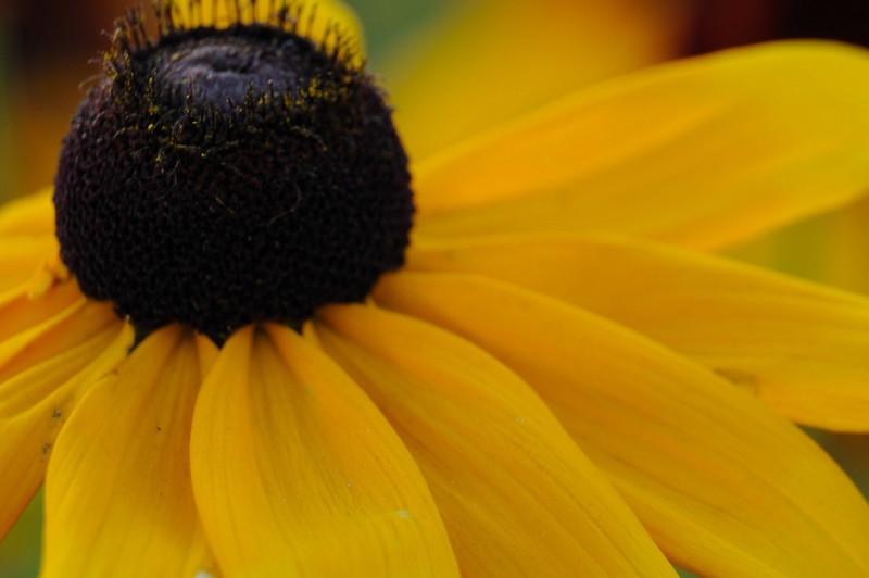 flowers_20080714-008.jpg