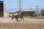 Prado Equestrian Center and Shamrock Morgans - www.pradoequine.com - (909) 597-5757