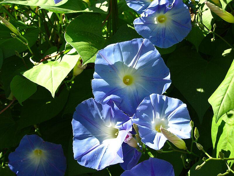 garden-2004-09-0237_std.jpg