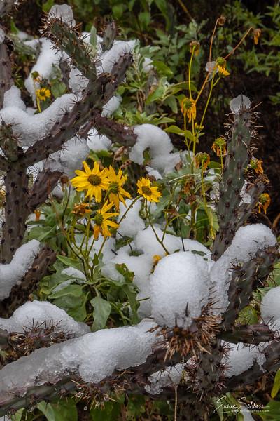 Snow Day 2-22-2019c-1486.jpg