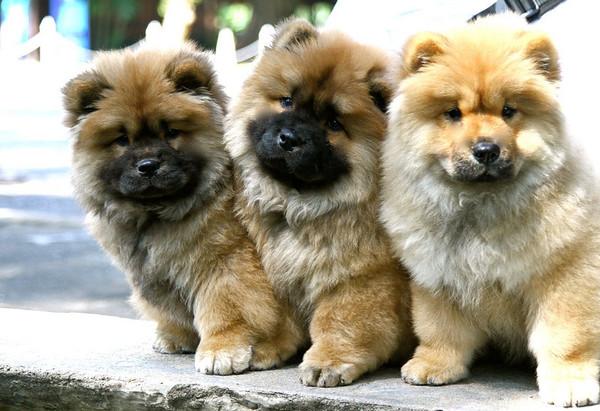 Bangkok Eks Puppies/Rose Garden December 27 2010