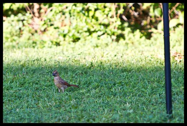 Birds of July 9th