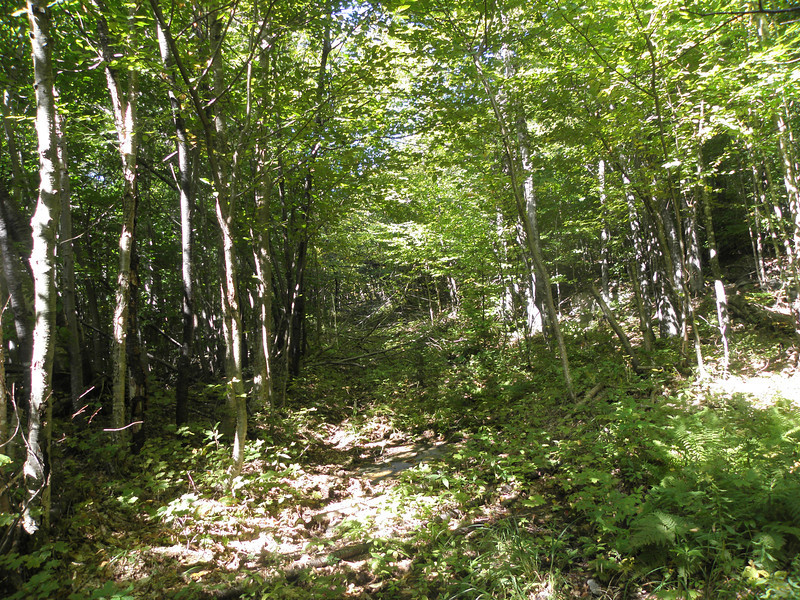 Came across this logging road at 2500' going across.JPG