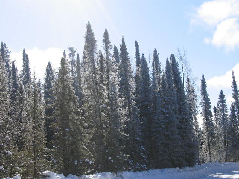 IMG_2755_main_winter_road_resize.JPG