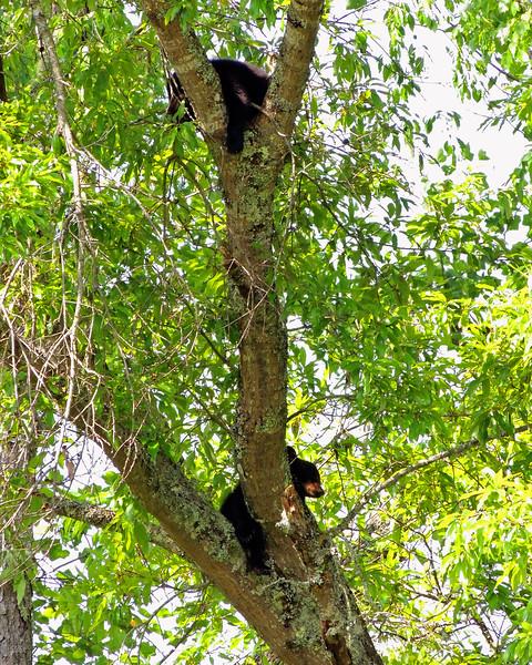 bear cub 02.jpg