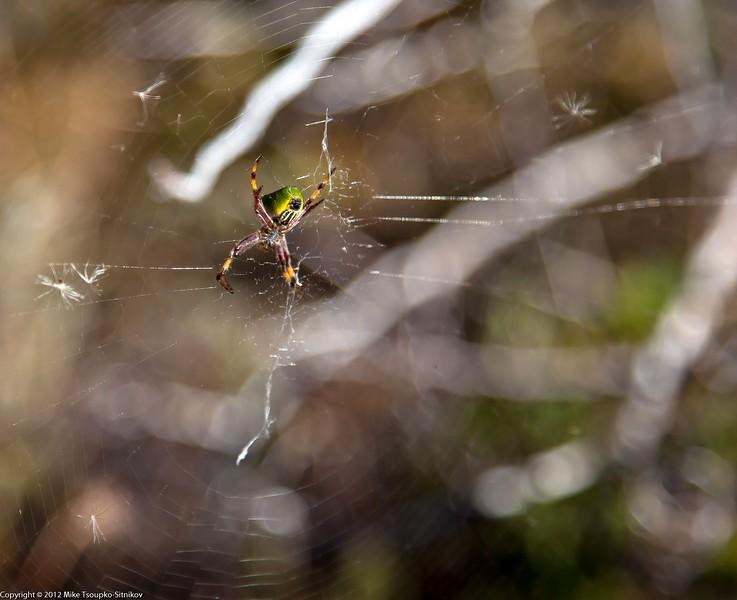 Spider at Cerro Torre Trail