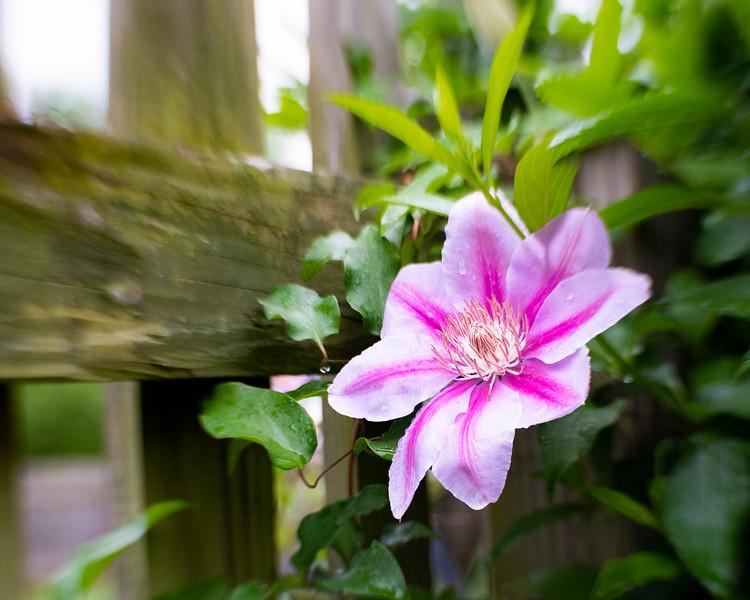 Flowers 04 26-98.jpg