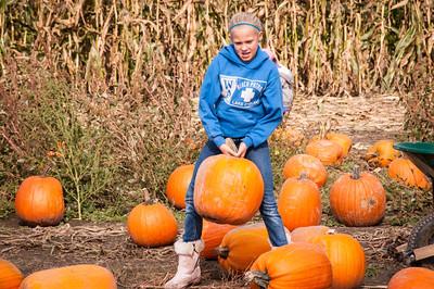 Pumpkin Farm & Halloween