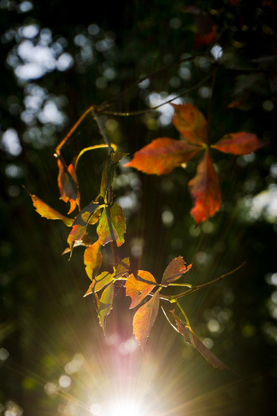 autumn 2015 - first changing foliage in sunrays at etcp(p).jpg