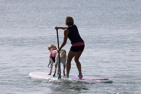Dog surf competition