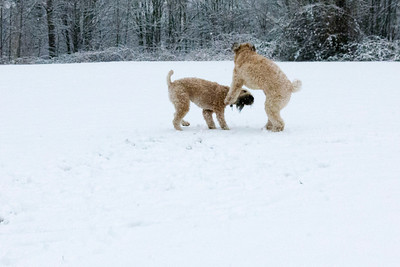 Olive & Bailey in Snow