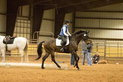 Horse 661