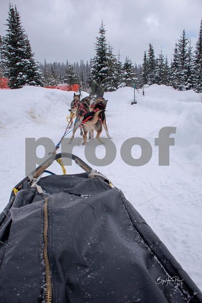 dog sled 22.jpg